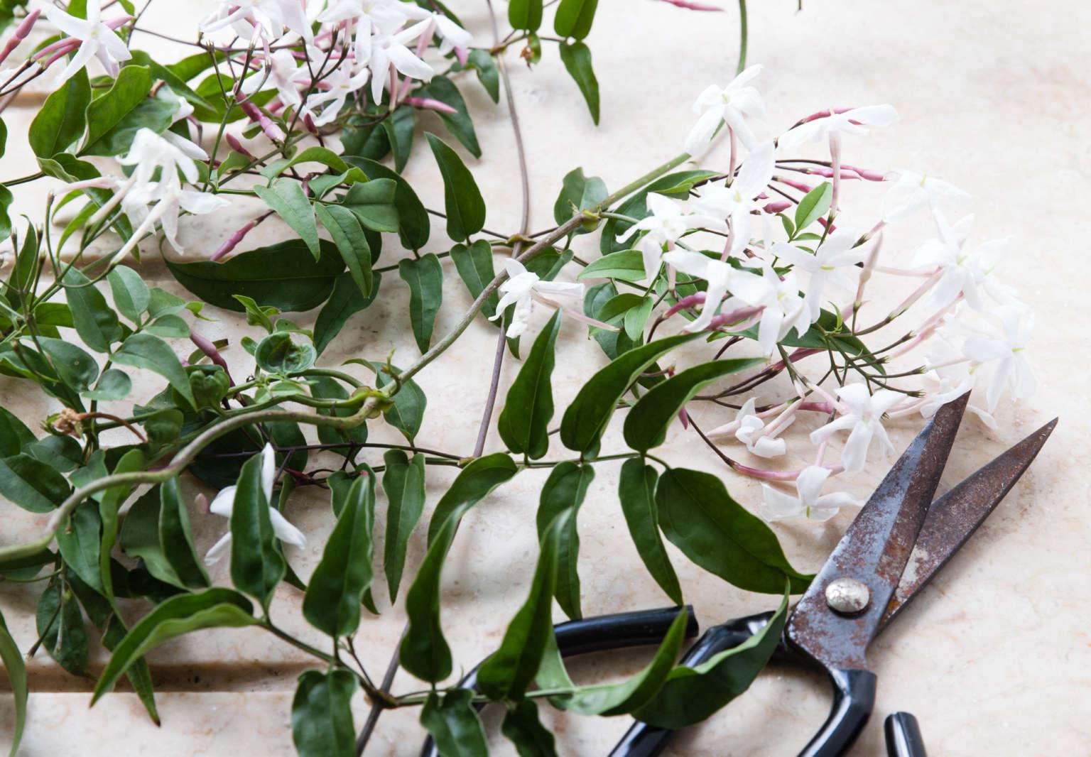 Rethinking Jasmine The Perfect Vase For A Fragrant Flowering Vine