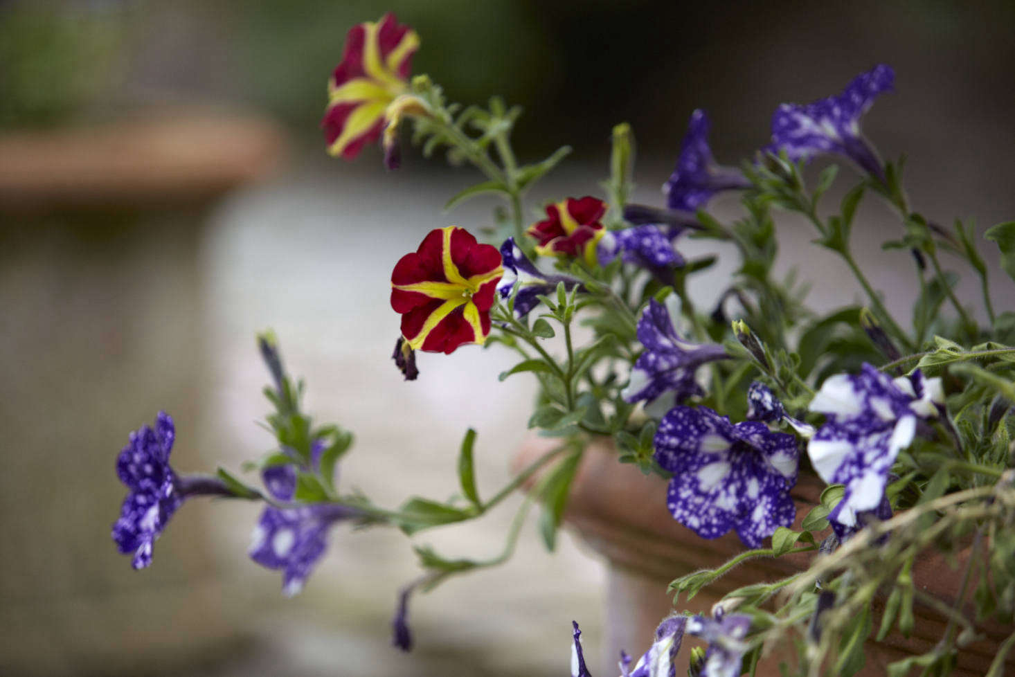The Garden Decoder What Are Annuals The Answer May Surprise You