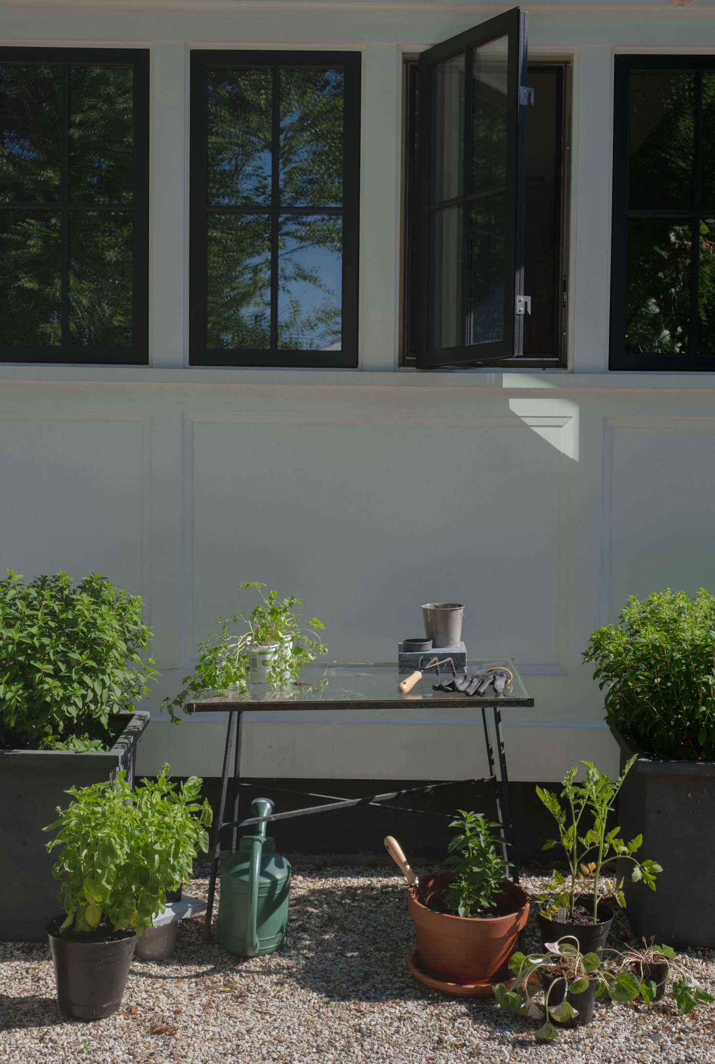 A glass table serves as potting bench, with basil and small strawberries ready to be planted.