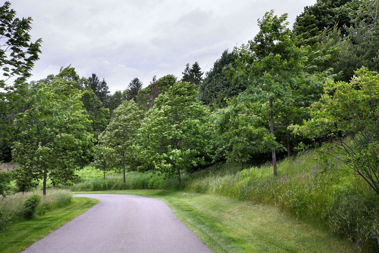 Along the driveway leading to the house, red oak (Quercus rubra) and white pine were planted in a natural, staggered sequence to blend with mature white pine already on the property. &#8