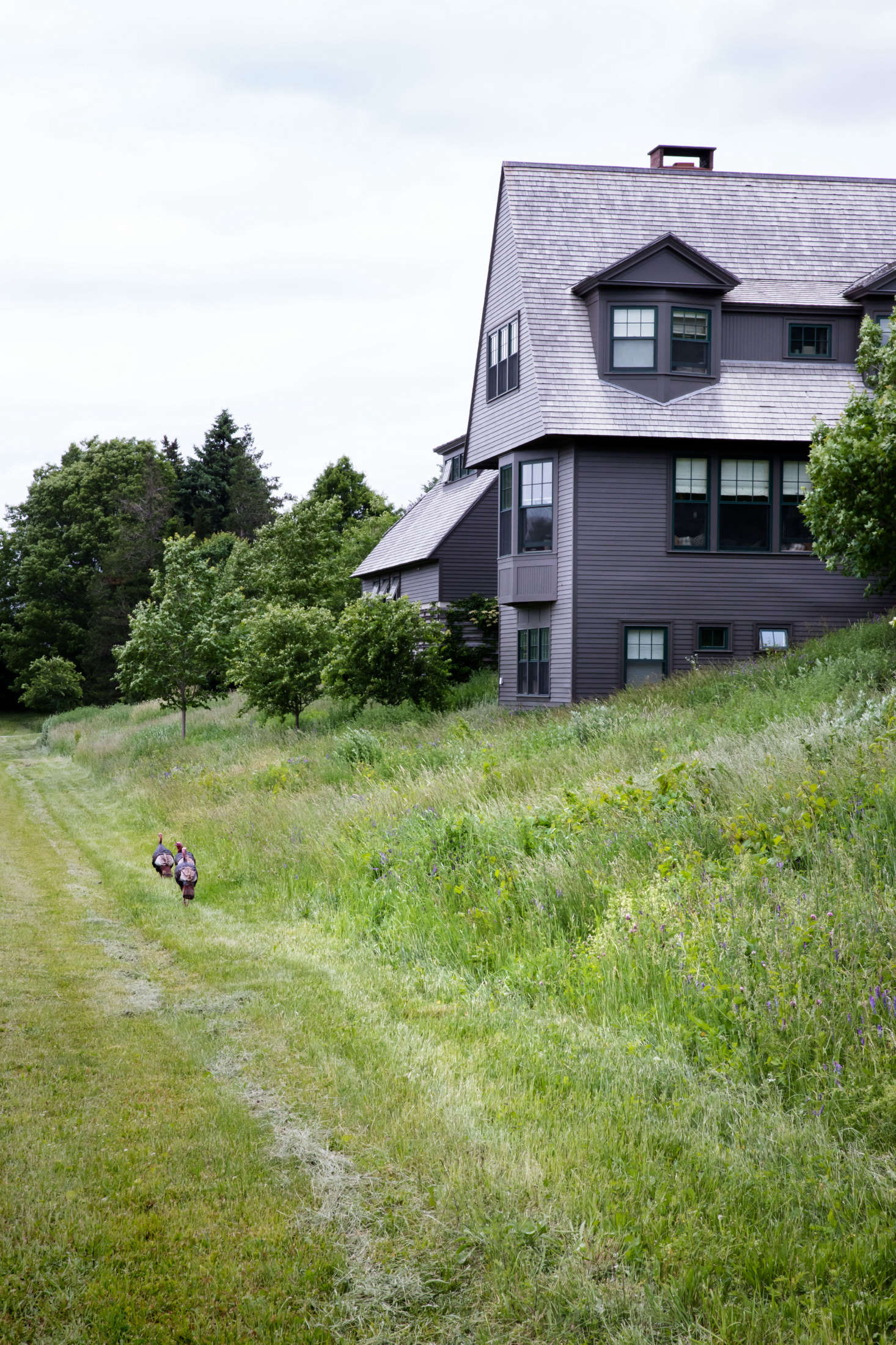 Nestled into the hillside meadow, the house takes full advantage of the open view.