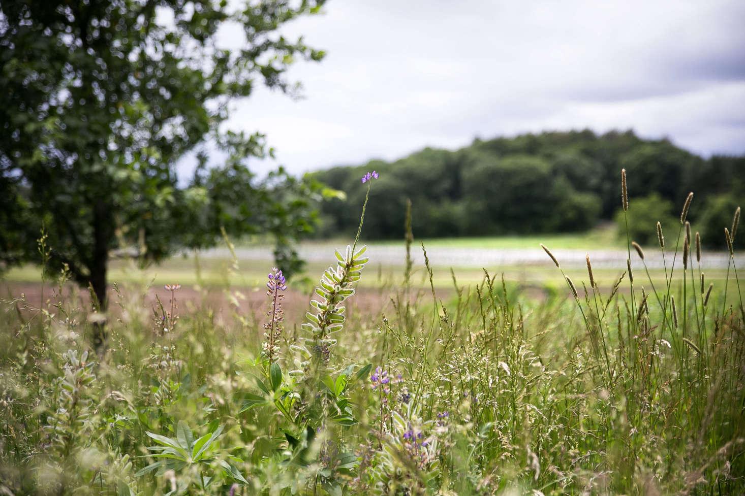 在风中,风中的草地和草地上的草地上有一种不同的景观。