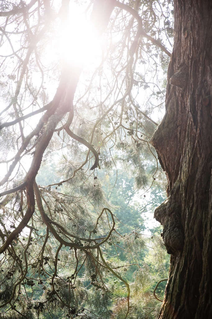 "The arboretum—which includes many rare trees, such as the Lebanese cedar and a Monterey pine —had been left untended for years. ""Many trees had died or were being swallowed up by rhododendron,"" says Bailey."