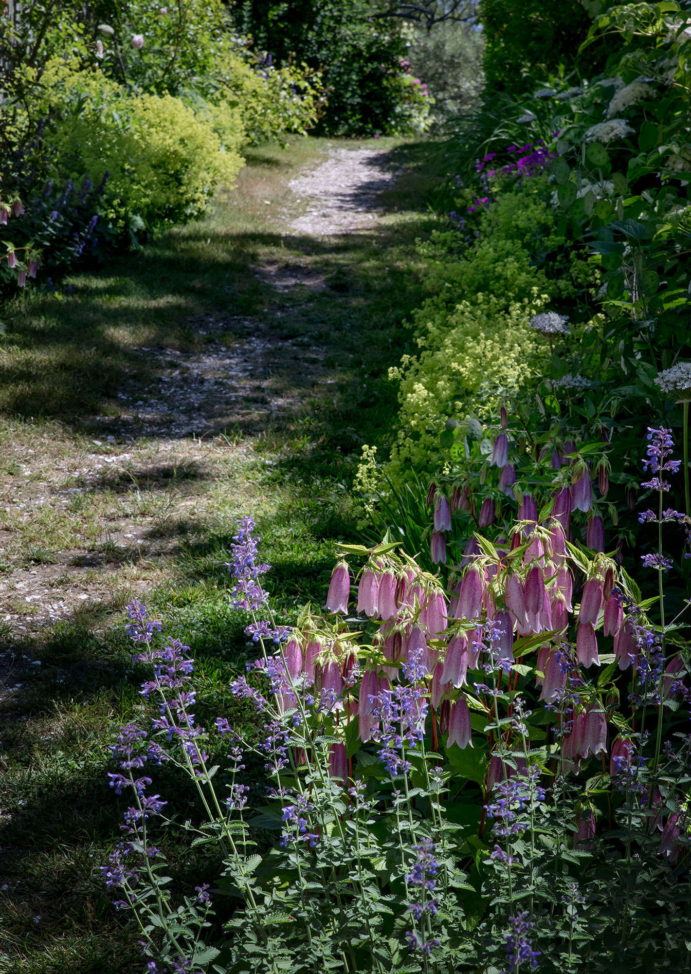 On both sides of the path alongside the main cottage, the couple planted Nepeta &#8