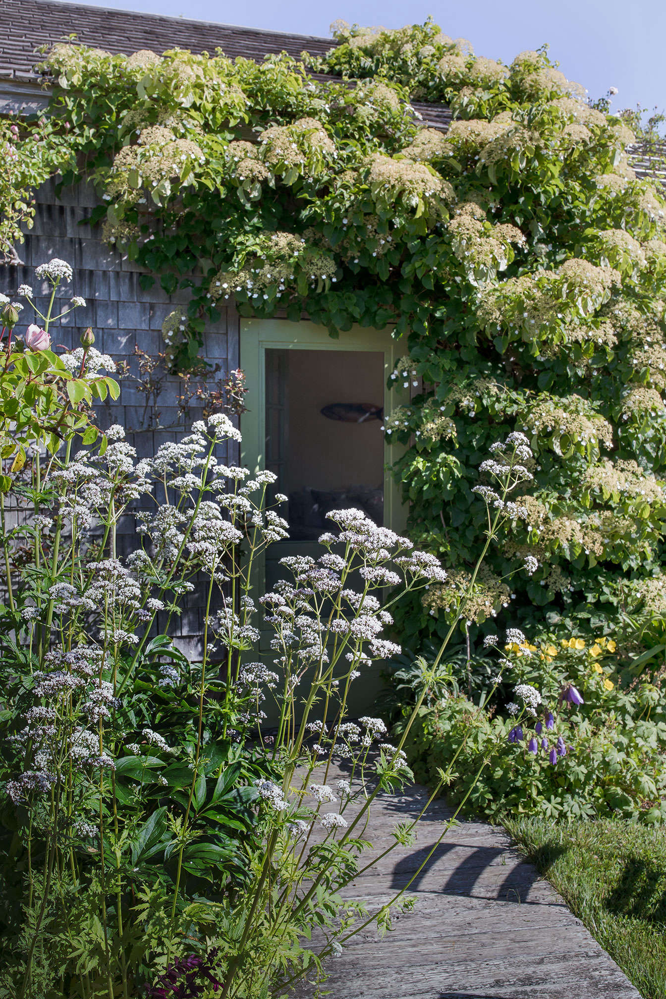 Tall white Valerian officinaiis and climbing hydrangea frame the doorway to a guest apartment.