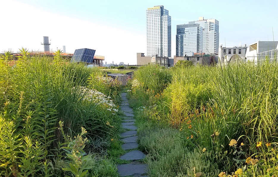 770f3b36ac4a Vice Media s Rooftop  A Brooklyn Meadow Garden with Panoramic Views ...
