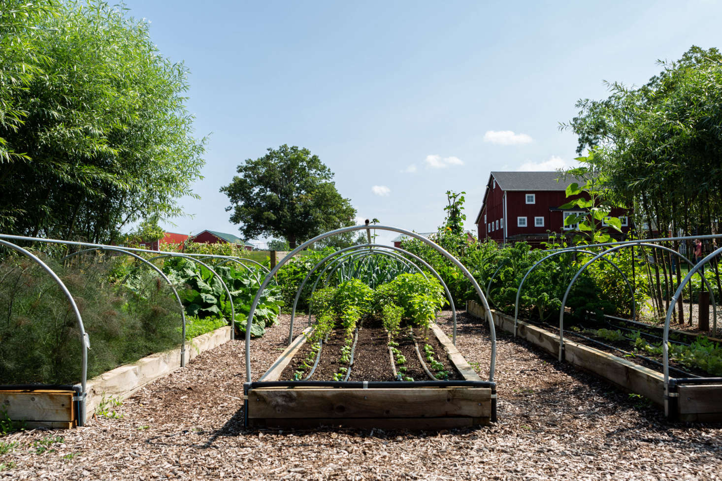 The payoff for conditioning your soil? See more of this crop at10 Edible Garden Ideas to Steal from Michigan's Favorite Foodie Farmers.