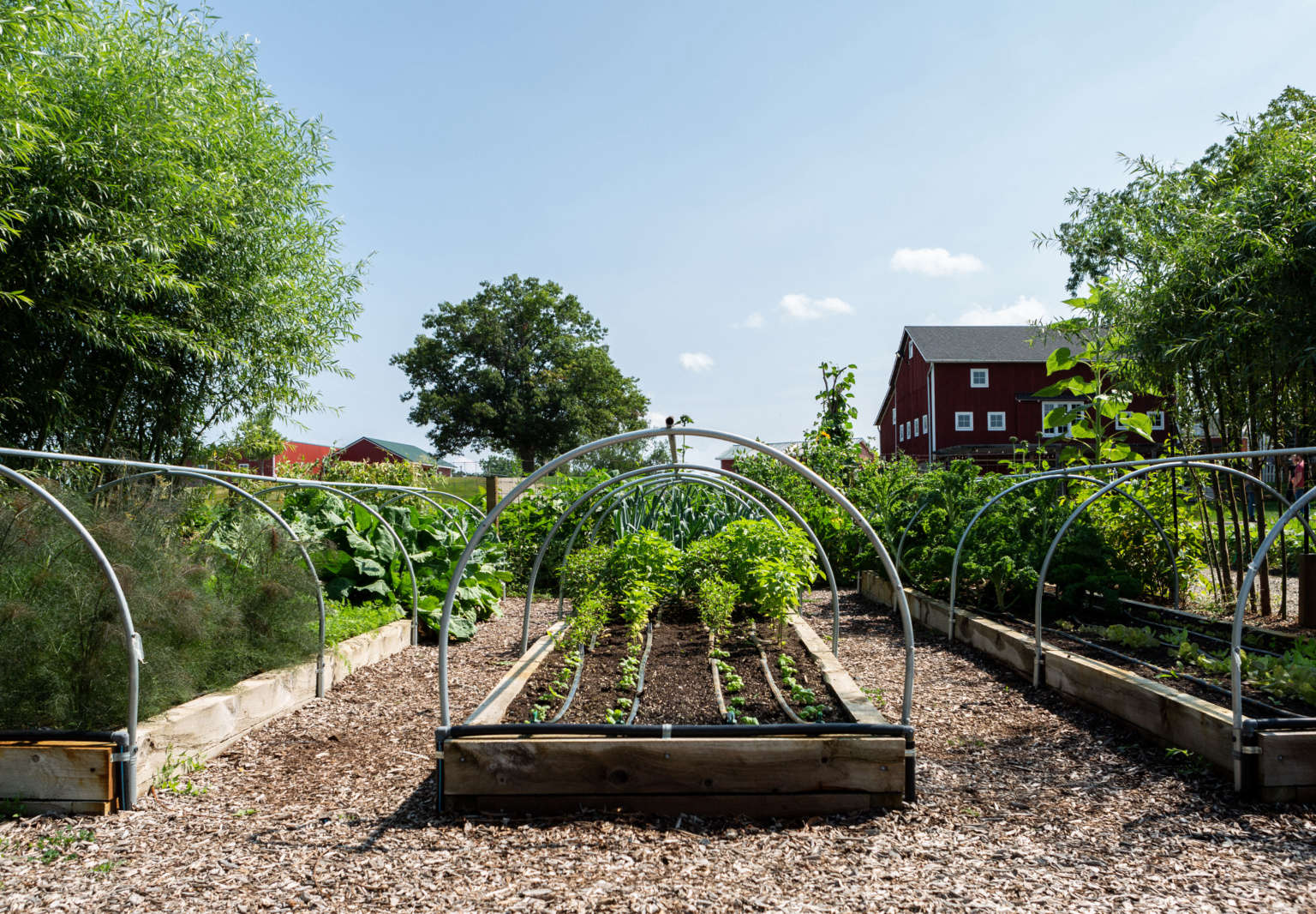 10 Edible Garden Ideas To Steal From Michigan S Favorite Foodie