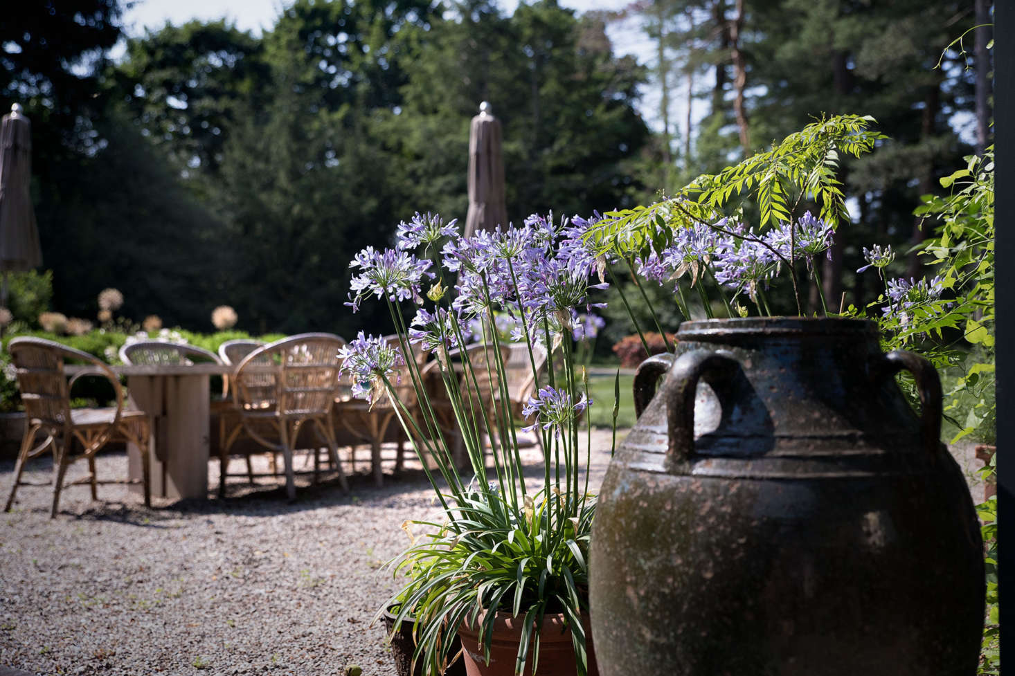 Plantings and garden accents such as agapanthus and urns maintain the Mediterranean feel.