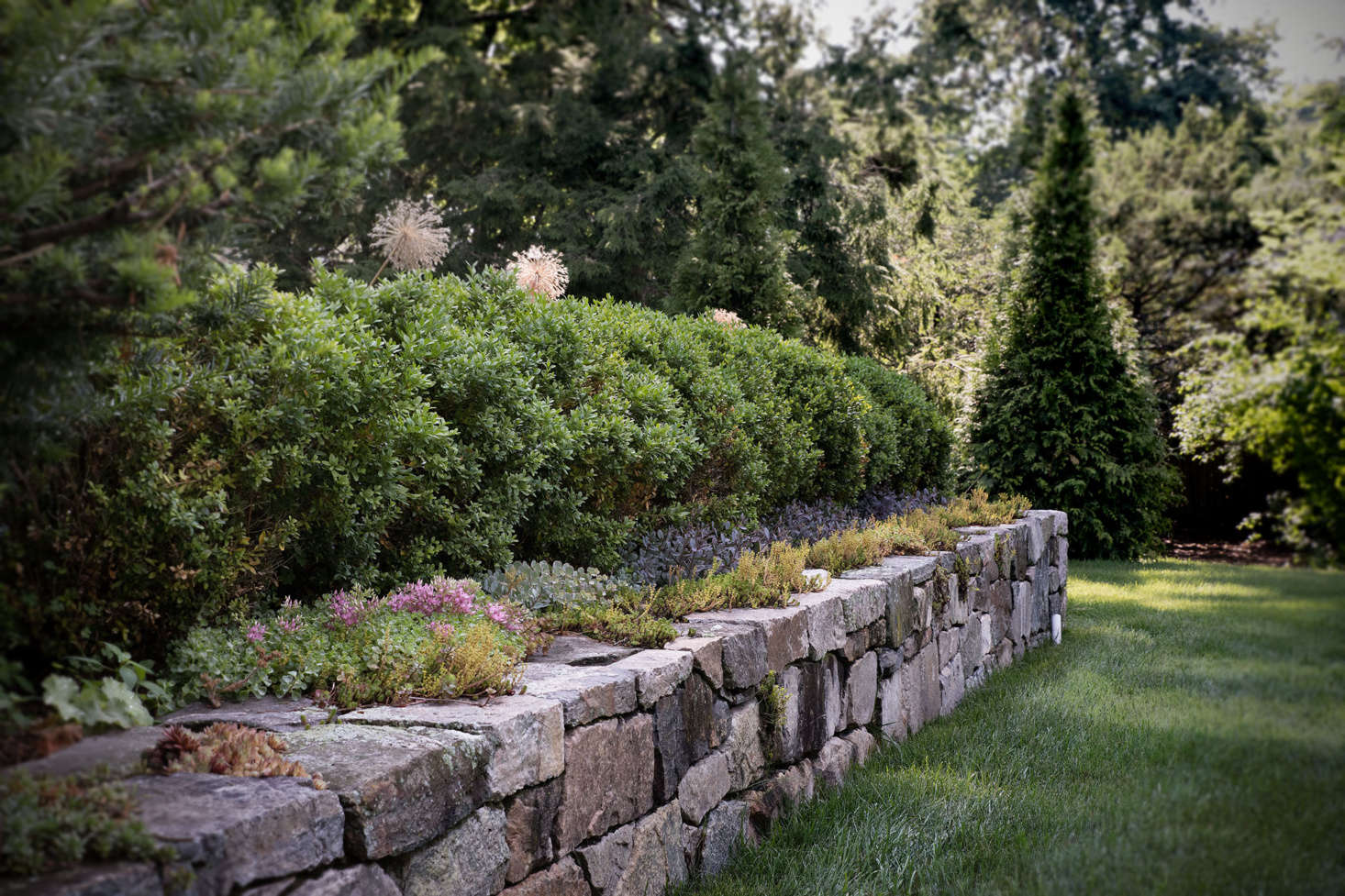 Old stones interplanted with mosses and creeping ground covers make the newly constructed wall seem age-old.