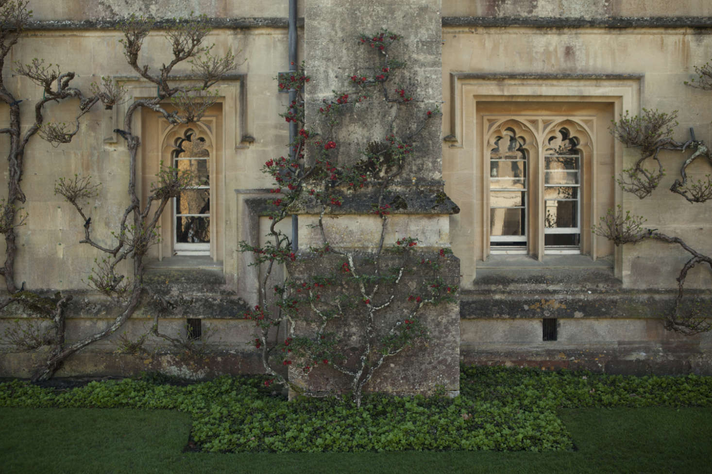 First on that to-do list? Pruning shrubs and trees. Photograph byJim Powell for Gardenista, fromThe Secret History: A Master Class in Gothic Pruning.