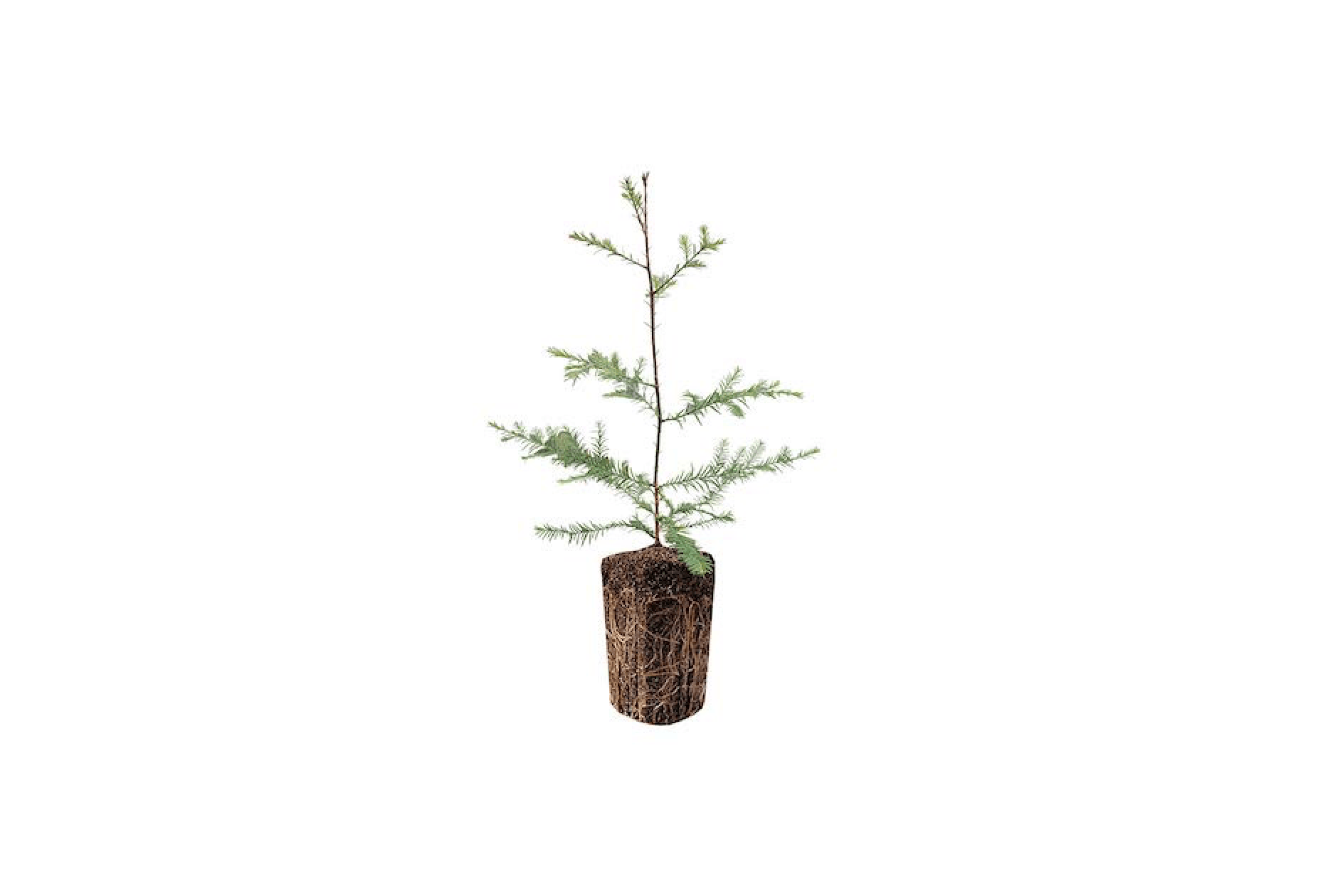 A Charlie Brown Christmas Tree That Can Change Your Life Gardenista
