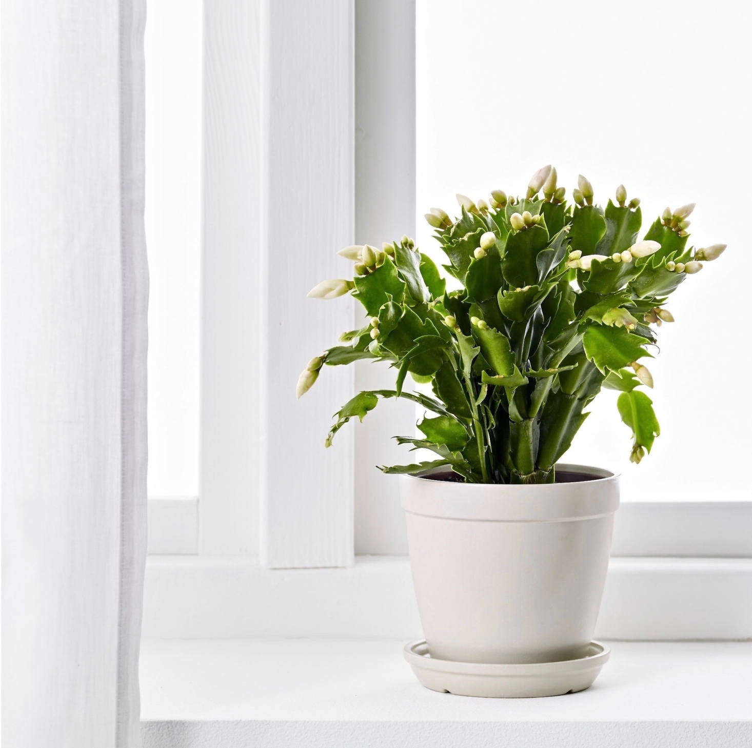 这是热带雨林的仙人掌,这是一种来自热带的植物。很美,但在阳光明媚的夜晚,在阳光明媚的时候,它需要用冰的空间,用它的光线,用它的光线来刺激它。在《茶水上》杂志上学习《茶水》,《Wiaden》,学习手册,还有一份工作。用照片来。