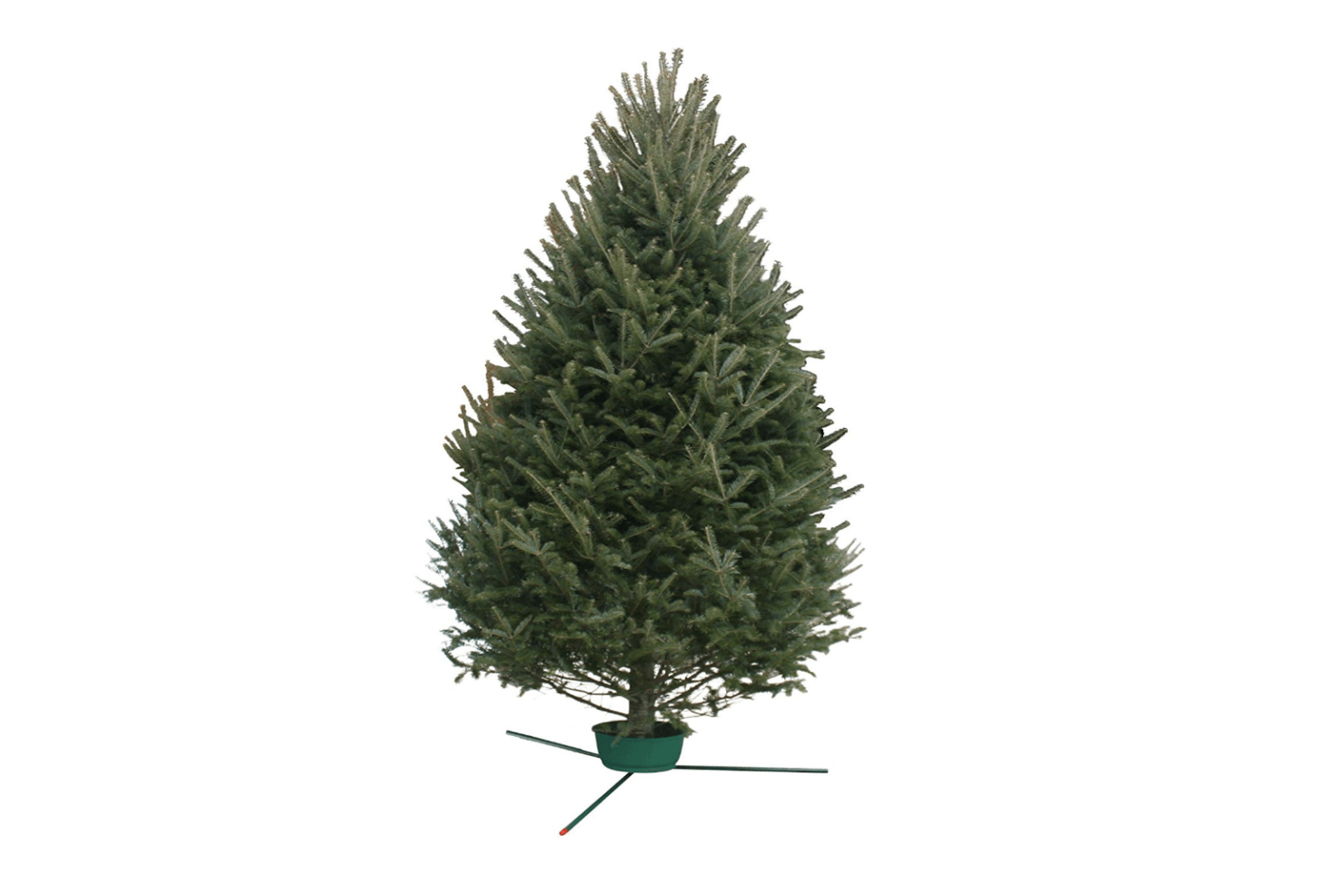 10 Things Nobody Tells You About Christmas Trees