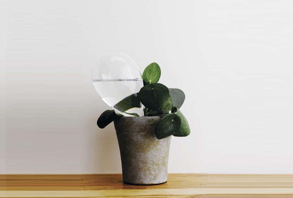 当你离开的时候,你应该离开保姆,或者其他保姆。水的泡沫和蜂蜜植物可以使植物生长在潮湿的土壤中,而你的头发会被降解的植物吸收