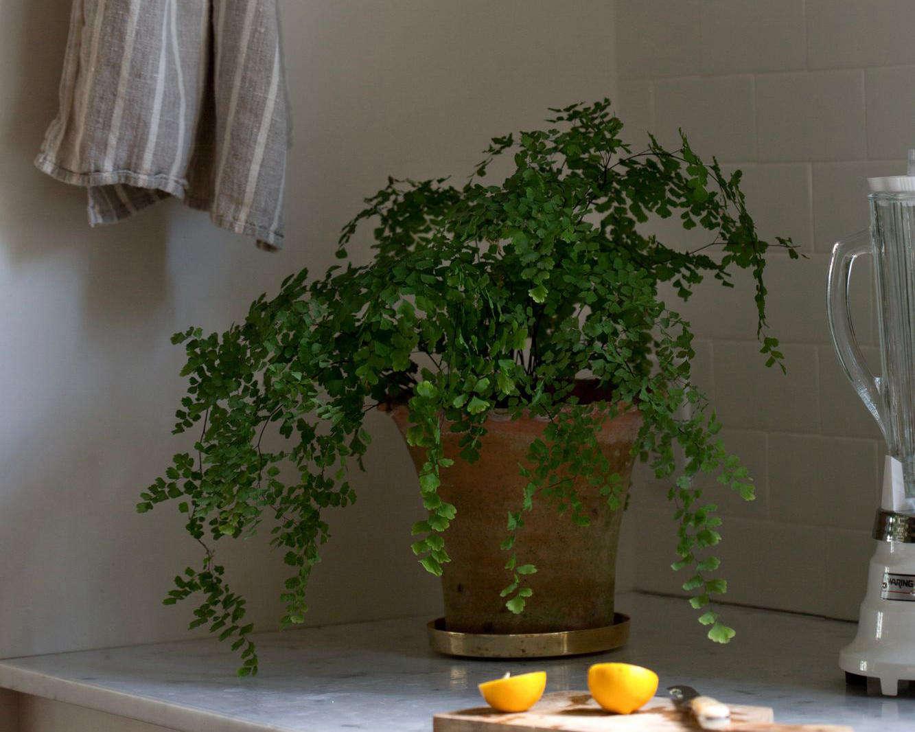 The Garden Decoder: What Do