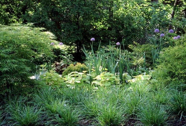 Gardening 101 Moor Grass Gardenista
