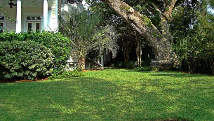 Gardening 101: St  Augustine Grass - Gardenista