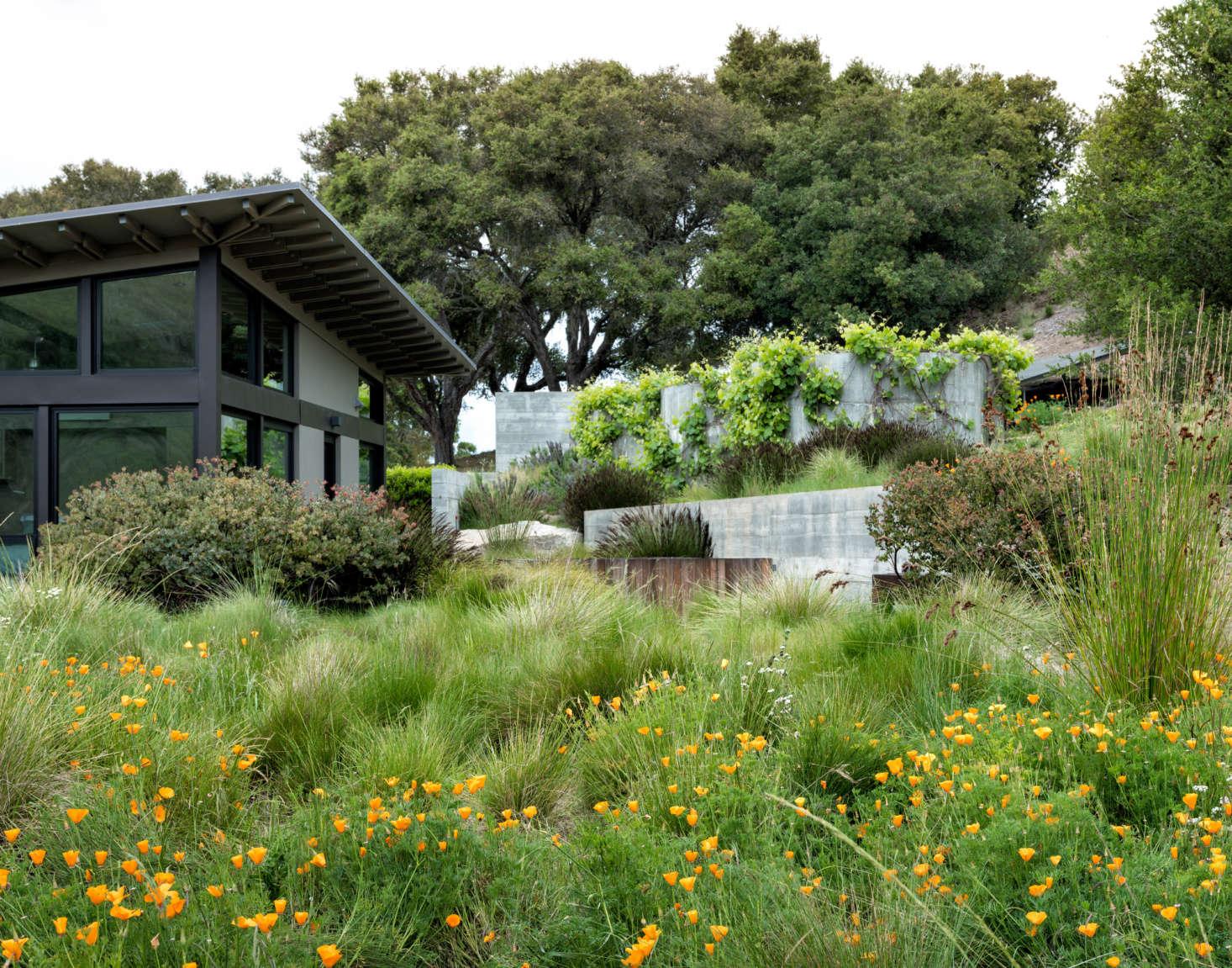 加州动物园(加利福尼亚)位于加州大学,位于草原花园,而在草原上,生长在草地上。