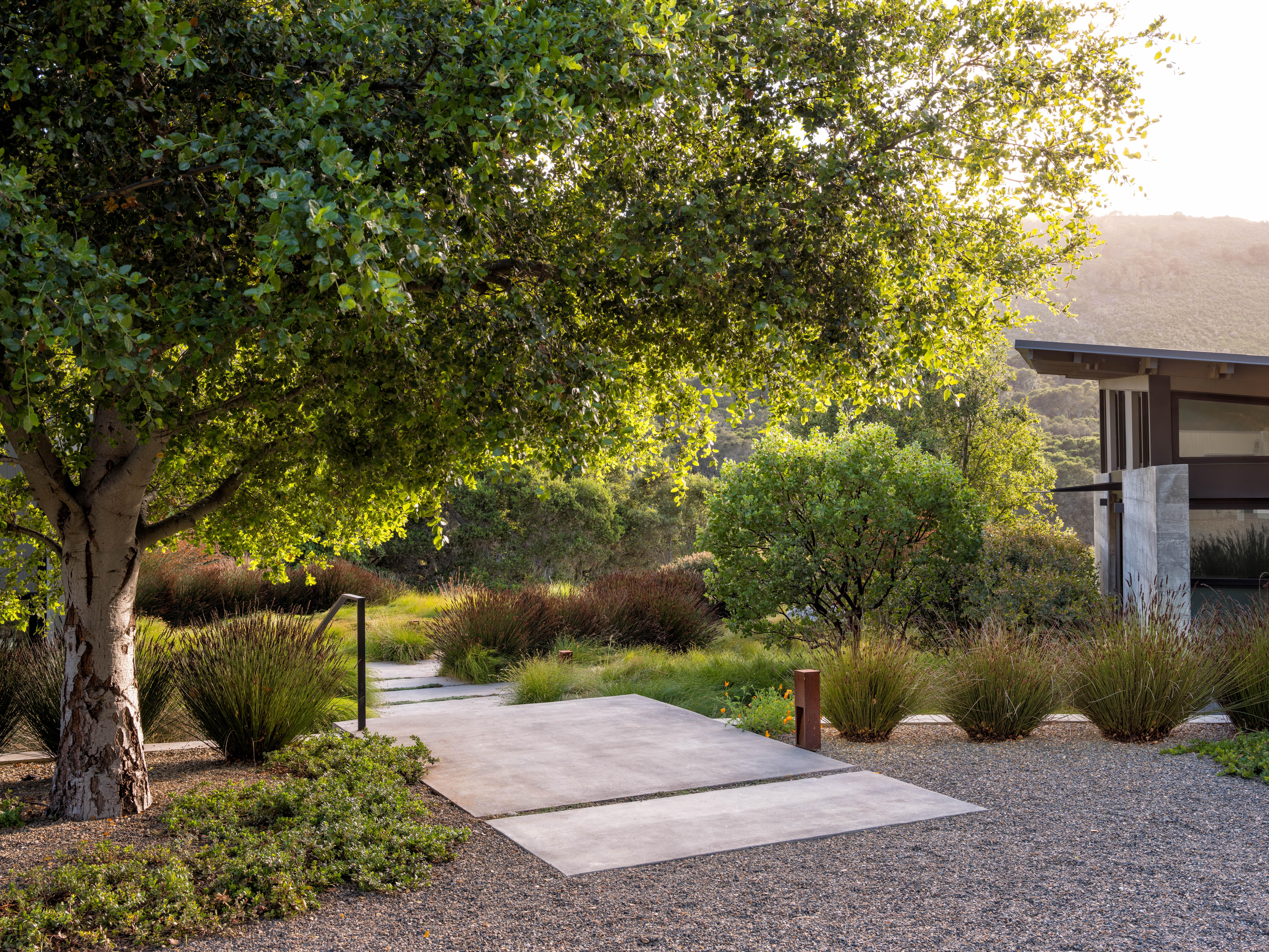 一个加利福尼亚的橡树,一个农场,而树,一个婴儿的橡树,以及植物的棉树