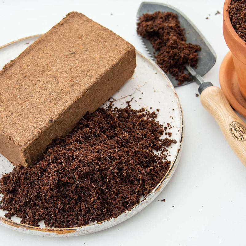 Sold in blocks that will expand into fluffy coir when you add water, Coir Bricks are $5.95 from Spring Hill Nurseries.