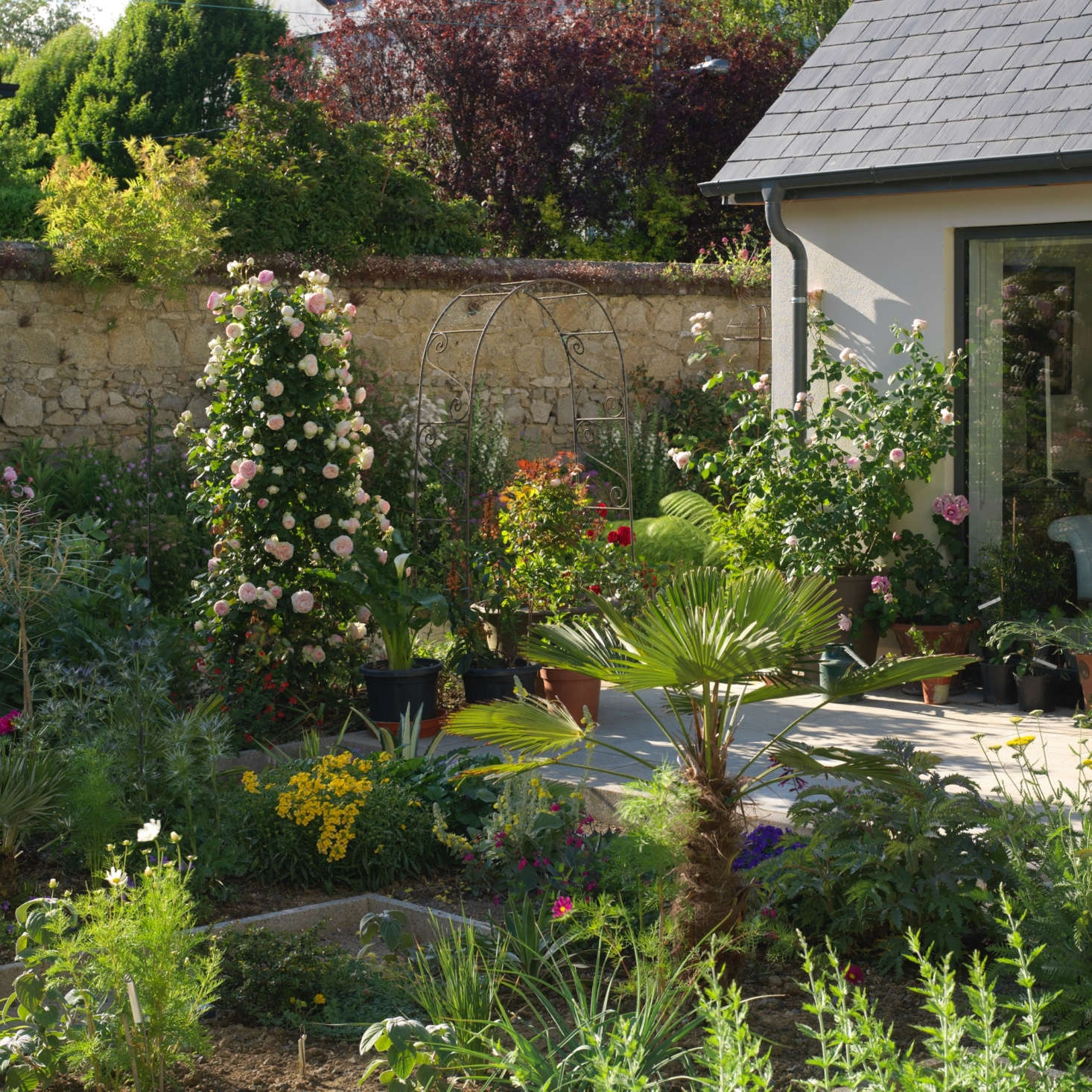 The walls of the sunny garden provide shelter from wind to climbing roses, including pink &#8