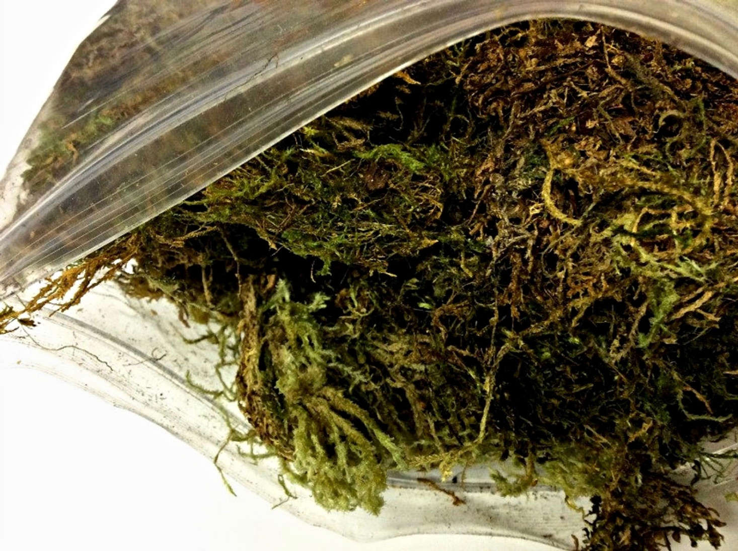 A 1-gallon bag of Sphagnum Moss is $10 from Sassparilla Home via Etsy.