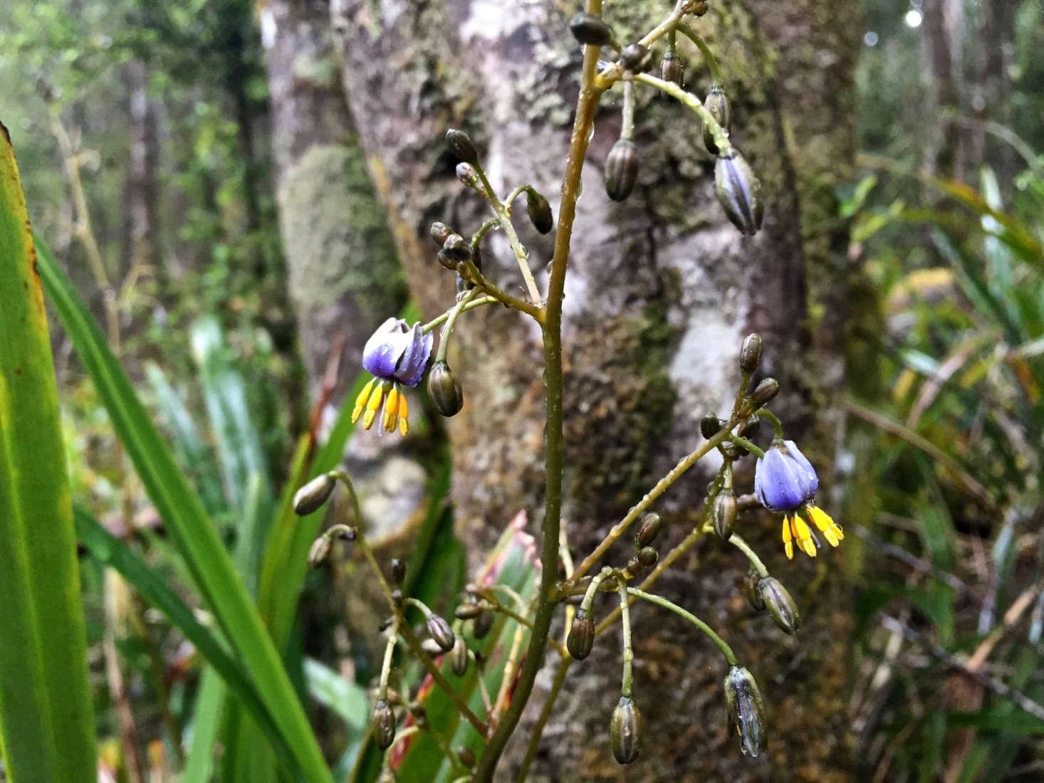 花花丛中的百合。来自卡特勒的《RRRRRRRRRRRRA。