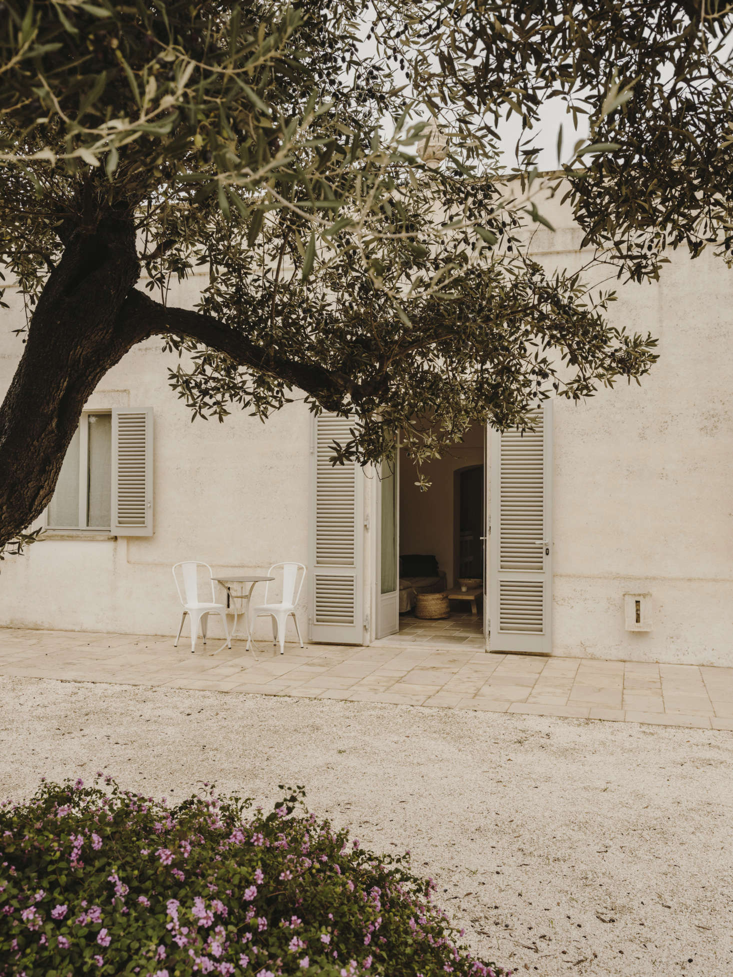 At Villa Castelluccio in the countryside of Puglia, remodeled by architect Andrew Trotter, gravel courtyards shaded by olive trees invite guests into the garden. Photograph by Salva López.
