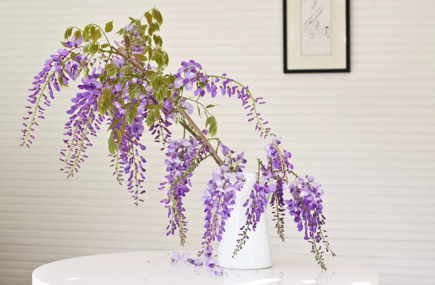 Foraged wisteria from Michelle&#8