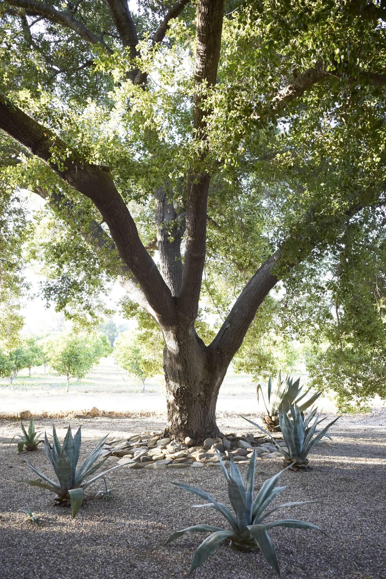 An old tree provides respite from the summer heat.