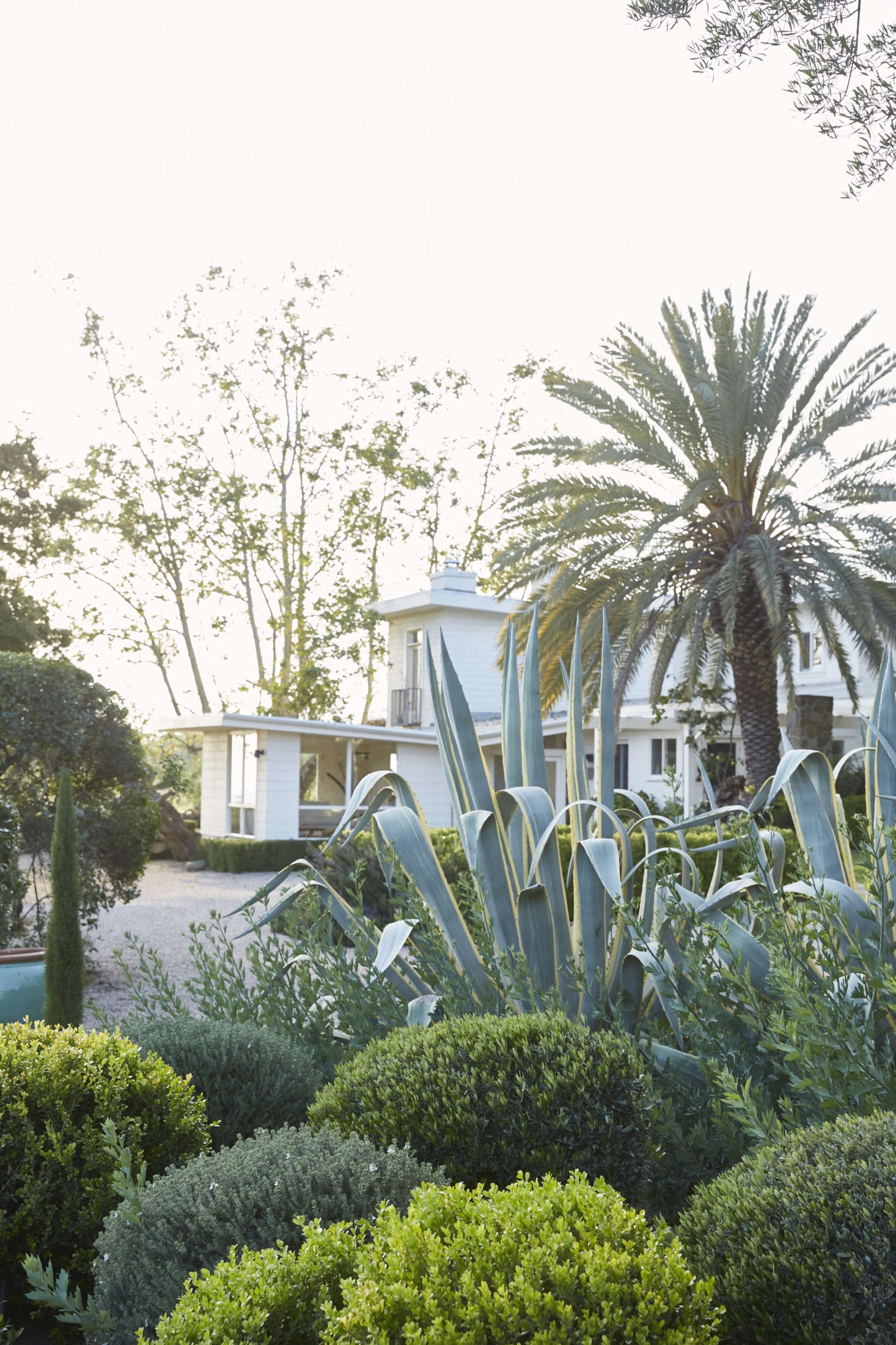 The layered textures and shades of green provide privacy (here, for the main house) and evoke both California (palm trees) and the south of France (topiary).