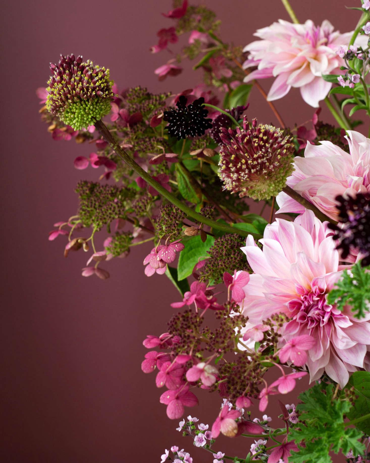 粉色和粉色的颜色很漂亮。这个,包括苏菲,包括艾琳·多娃,包括其他的植物,包括多莎·多娃,包括她,伊兹。
