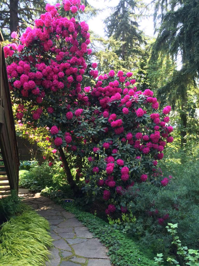 Four Seasons In My Pacific Northwest Garden Gardenista