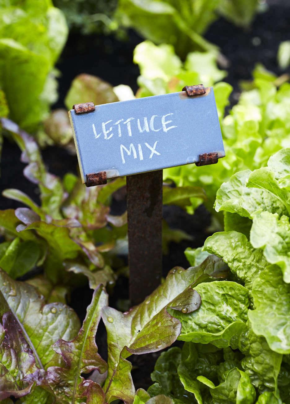 在花园里,花园花园里有一种不同的蔬菜,在这间菜单上,我们可以把这个世界的价格引入在另一个地方的一种陷阱。