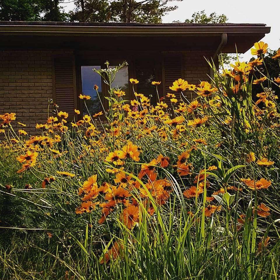 Front Yard Meadow - Gardenista